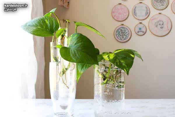 تزیین گل پتوس با ایده های خلاقانه و شیک