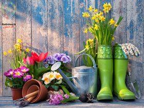 آماده سازی باغ برای بهار با معرفی 6 گل