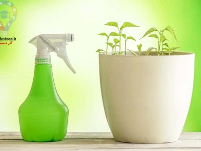 گیاهان دور کننده پشه کدامند؟ معرفی چند گیاه موثر