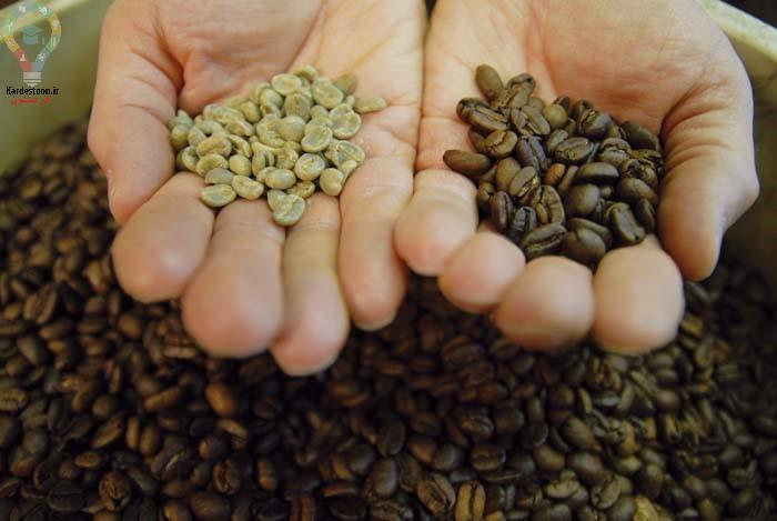 کاشت بذر قهوه در خانه