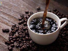 طریقه کاشت بذر قهوه در خانه | کاشت در گلدان و باغ