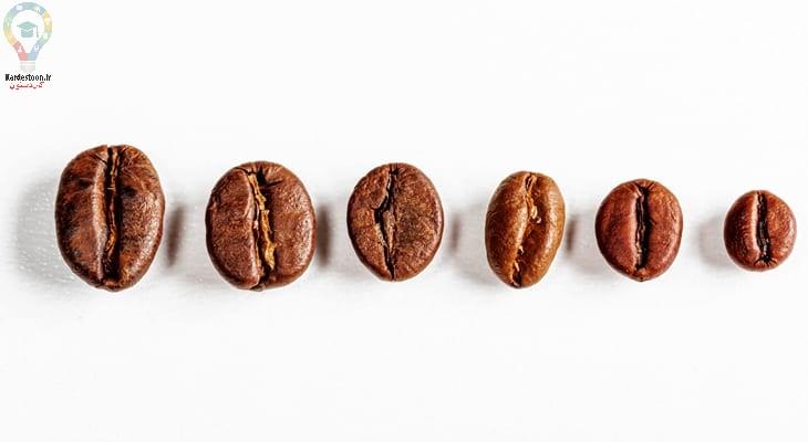 کاشت بذر قهوه
