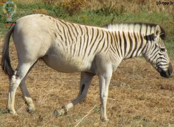 آیا حیوانات منقرض شده در ۱۰۰ سال اخیر را میشناسید؟