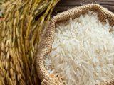 چگونه از شر حشره زدن برنج خلاص شویم؟