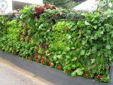 نحوه کاشت سبزیجات با بطری روی دیوار خانه